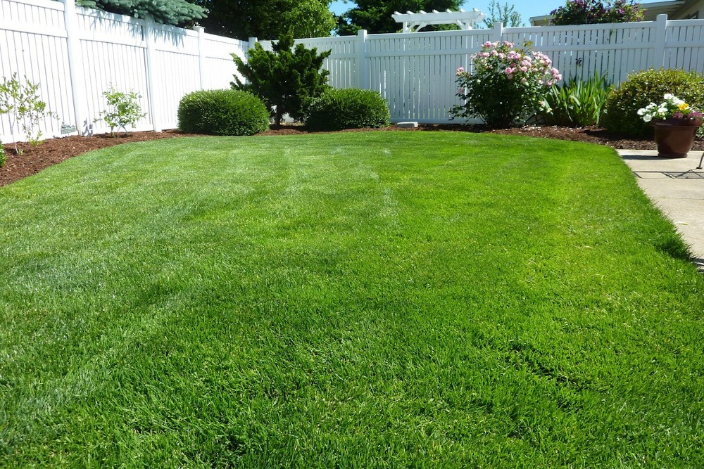 How to Spruce Up Your Lawn for Spring